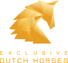 Exclusive Dutch Horses